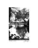 Bridge In Pond