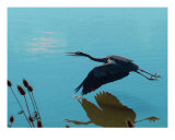 Blue Heron