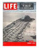 Turtle Returning to Sea after Laying Eggs  February 8  1954