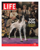 German Pointer  Carlee  Won Best in Show  129th Westminster Kennel Club Dog Show  March 11  2005