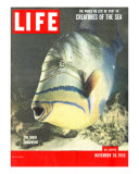 Queen Triggerfish  The World We Live In: Creatures of the Deep  November 30  1953
