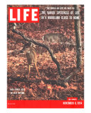 New Jersey Deer  The World We Live In: Woodland Close to Home  November 8  1954