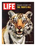 Tiger  June 25  1965