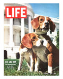 President Johnson's Beagles  June 19  1964