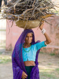 Woman Carrying Firewood on Head in Jungle of Ranthambore National Park  Rajasthan  India