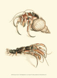 Hermit Crabs I