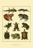 Oken Amphibians