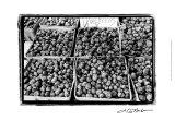 Farmer's Market VI