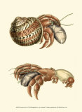 Hermit Crabs II