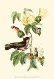 Exotic Birds I