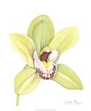 Orchid Beauty II