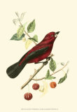 Exotic Birds V