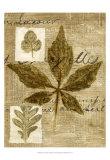 Leaf Collage III