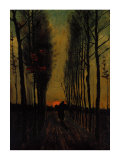 Lane of Poplars at Sunset