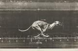 Animals in motion / Dog
