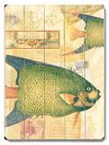 Natural Wonders - Fish