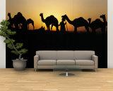 Silhouette of Camels in a Desert  Pushkar Camel Fair  Pushkar  Rajasthan  India