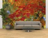 Fall Foliage  Guilford  Baltimore City  Maryland  USA