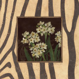 Paperwhites I