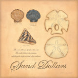 Sand Dollars