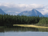 Landscape of Pine Trees Along Kluane Lake in Yukon  Canada