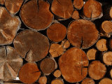 Close-Up of the Ends of Cut Logs with an Intricate Pattern in France
