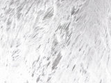 Abstract White Background of Frozen Ice and Snow