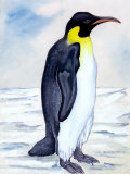 Portrait of Penguin