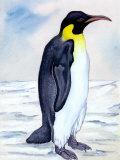 Portrait of Penguin