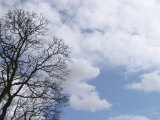 Wispy Clouds in Brilliant Sky with Tree