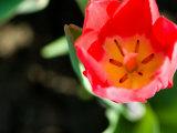 View of Beautiful Blooming Flower