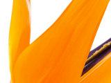 Close-Up of Bright Orange Flower Petals in Bloom