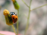 Selective Focus and Close-Up on Tiny Ladybug Insect