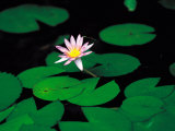 Beautiful Blooming Flowers and Lily Pads in Garden