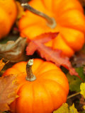 Traditional Autumnal Scene of Small Pumpkins and Fall Leaves