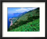 Vineyards from Trail Above Corniglia  Cinque Terre  Liguria  Italy