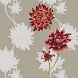 Dahlias