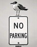 No Parking