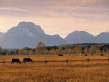 Jackson  Teton Range  Wyoming  USA