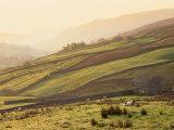 Swaledale  Yorkshire Dales  Yorkshire  England