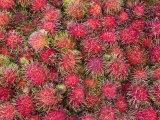Lycee Fruits  Rambutan Fruit  Malaysia