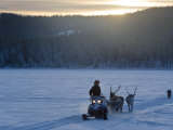 Winter Landscape  Reindeer and Snowmobile  Jokkmokk  Sweden