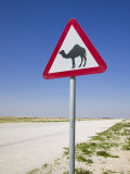 Road Sign-Road to Al-Zubar  Al-Zubara  Qatar