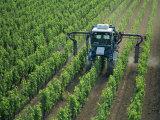 Vine Spraying  StEmilion  Bordeaux Region  Aquitaine  France