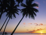Pam Tree and Beach at Sunset  Tahiti  French Polynesia
