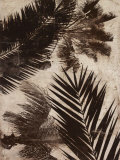 Palms II