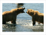 Kodiak Bear Alaska Conversation