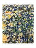 Flowering Shrub Giclée par Vincent Van Gogh