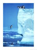 Penguins Diving Off an Iceberg