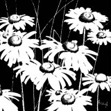 Black and White Daisy